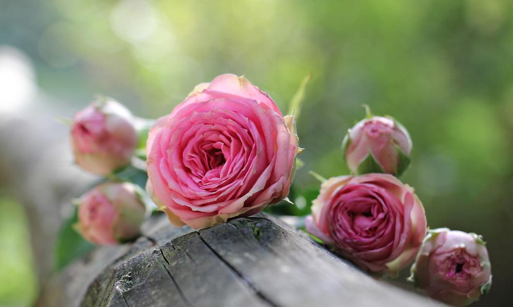 El agua de rosas es un tónico